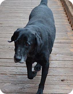 Temple Ga Labrador Retriever Meet Katie A Dog For Adoption Http Www Adoptapet Com Pet 1206429 Dog Adoption Labrador Retriever Kitten Adoption