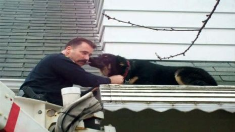 Officer Vincent Semanik Rescues A German Shepherd Off The Roof Of