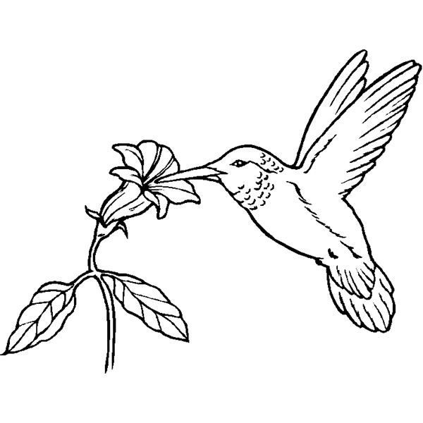 Realistic hummingbird Coloring Page | Bird Coloring Sheets for DTP ...