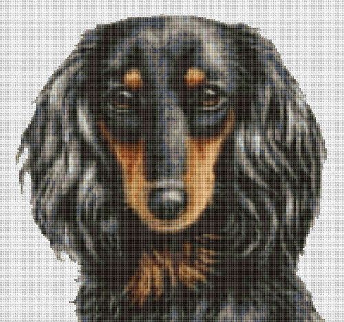 Counted Cross Stitch Pattern Long Haired Dachshund Dog cs0831 Gallery