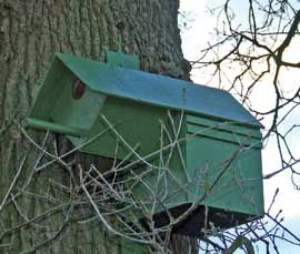 Owl+Boxes+for+Sale | Little Owl Nest Box For Sale