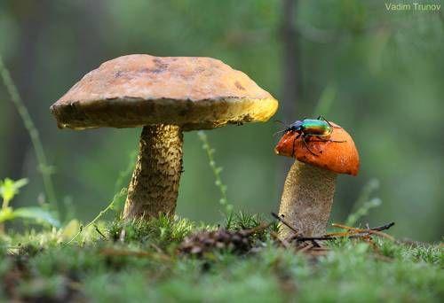 В осиновом лесу. Фотограф Вадим Трунов (с изображениями ...