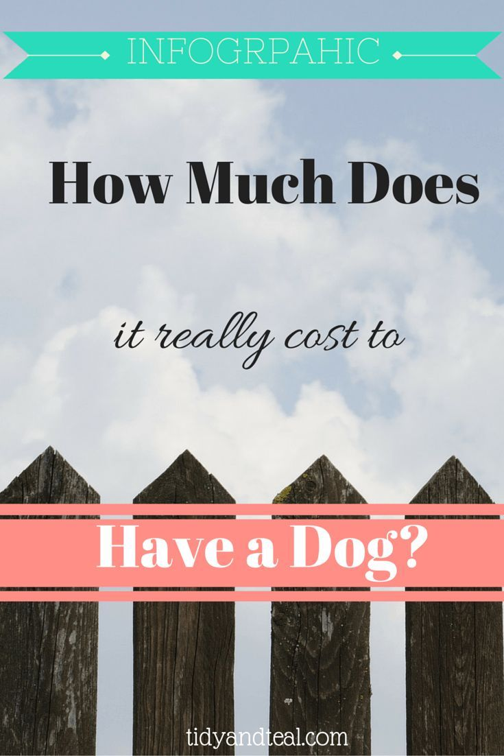 How Much Does It Really Cost To Have A Dog