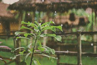 Manfaat Air Hujan Bagi Kesehatan Menanam Hujan Kesehatan