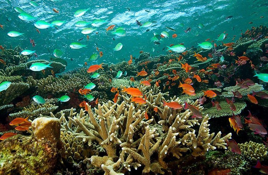 Beqa Lagoon Resort Maldives Vacation Packages Fiji Beach Beautiful Fiji