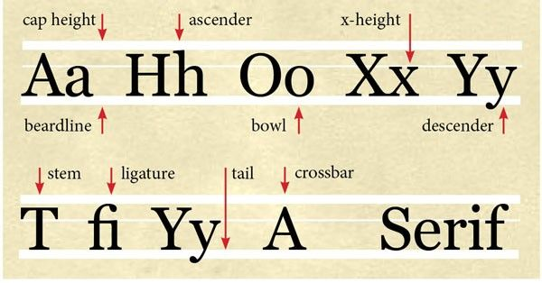 Typography Basics Understand The Language Of Letters  Typography