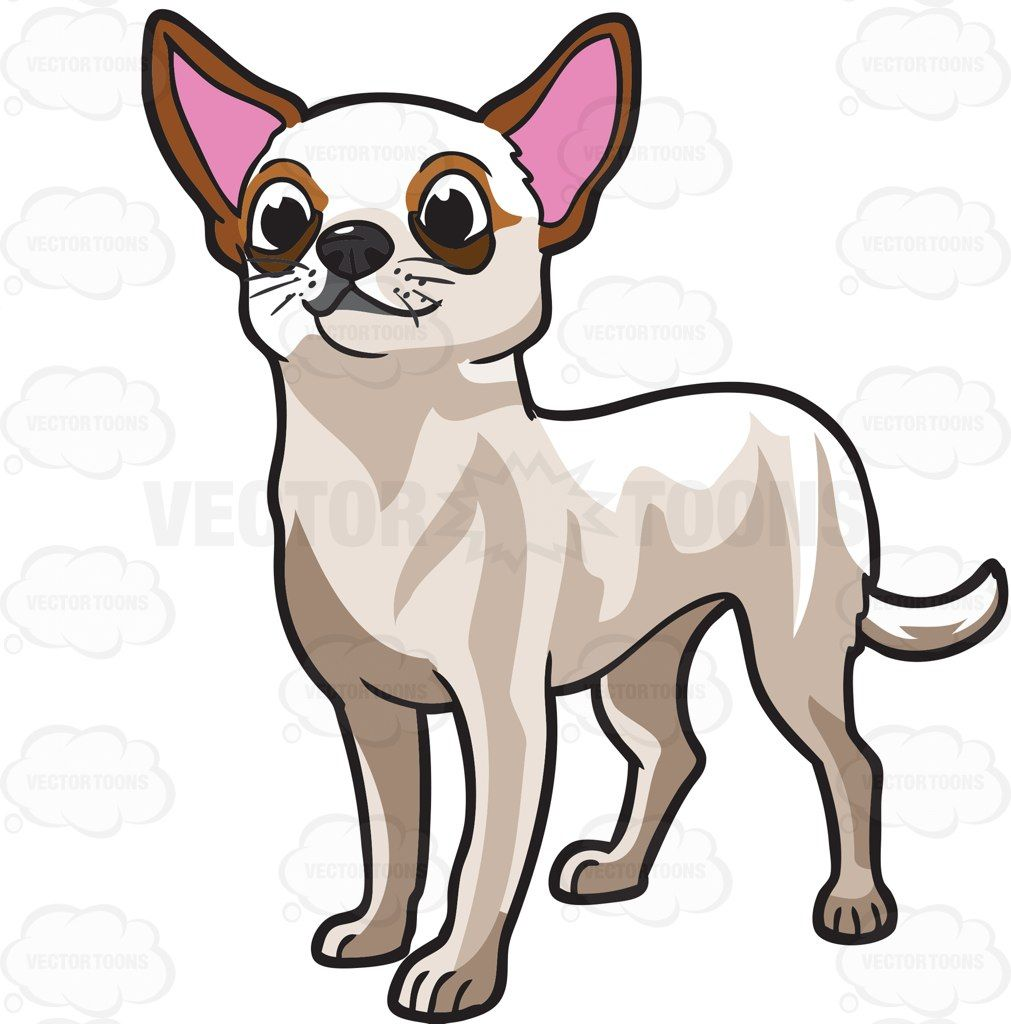 a very cute chihuahua adorable animals dog and dog breeds rh pinterest com chihuahua clipart png chihuahua clipart images
