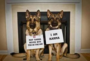 Austin Pets Craigslist Karma Dog Activities German Shepherd Dogs