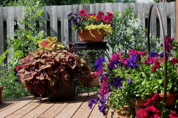 potted plant ideas for patio the green thumbers thrillers fillers and spillers outdoor potted plant ideas - Patio Flower Ideas
