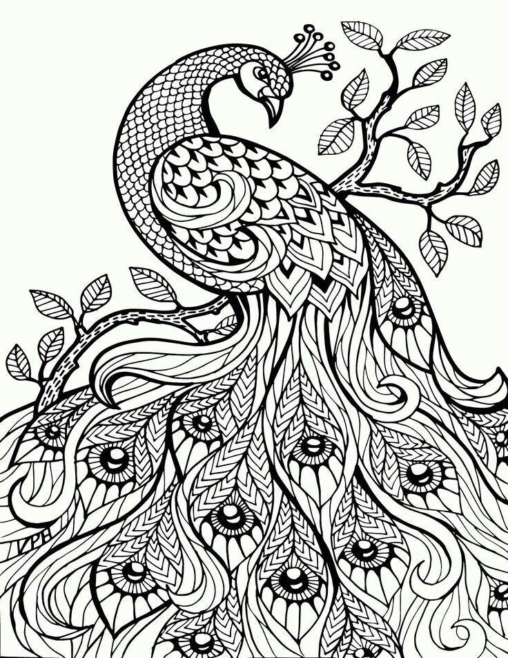 pin talita op gevoel kleurplaten dieren kleurplaten