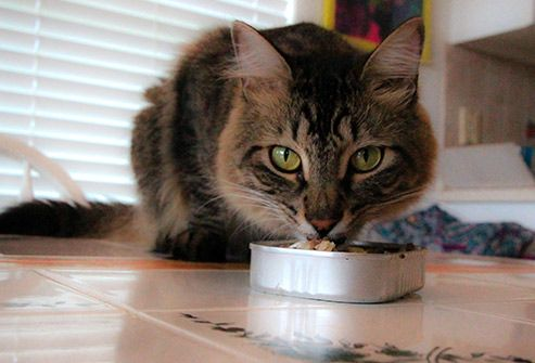 Slideshow People Foods Cats Can Eat Cats Tuna Cats Cat Facts