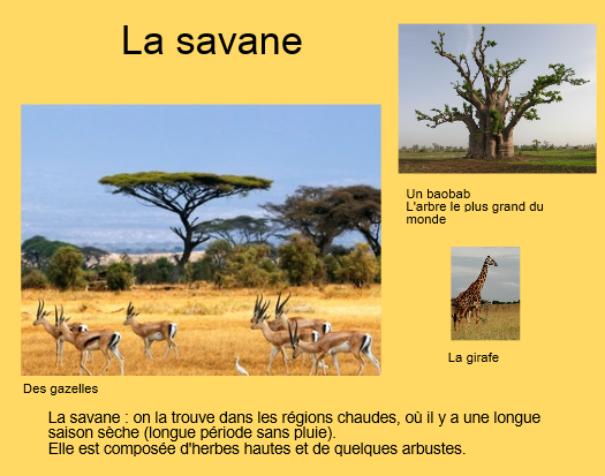 livre photo carnet de voyages afrique safari savane jungle pinterest voyage et photos. Black Bedroom Furniture Sets. Home Design Ideas