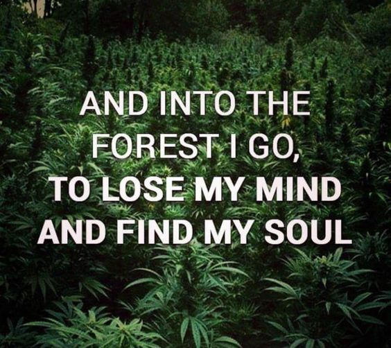 And into the forest I go, to lose my mind and find my soul From RedEyesOnline.net
