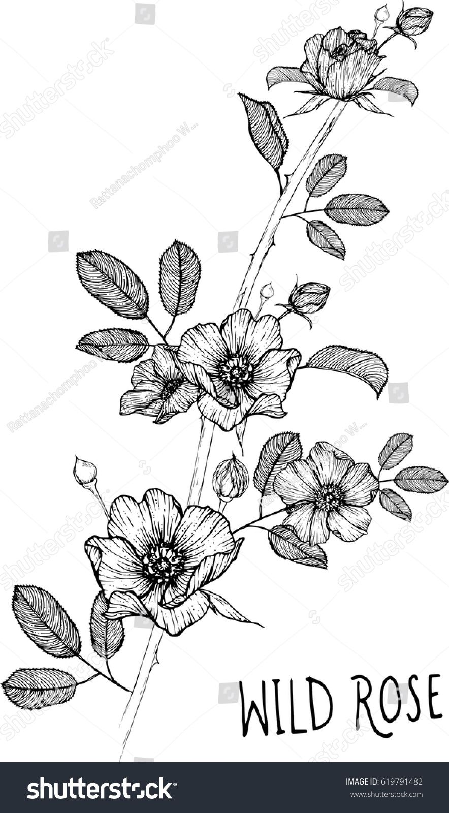 Drawing Flower Wild Rose Clip Art Vector Or Illustration Wild Rose Tattoo Wildflower Drawing Flower Line Drawings