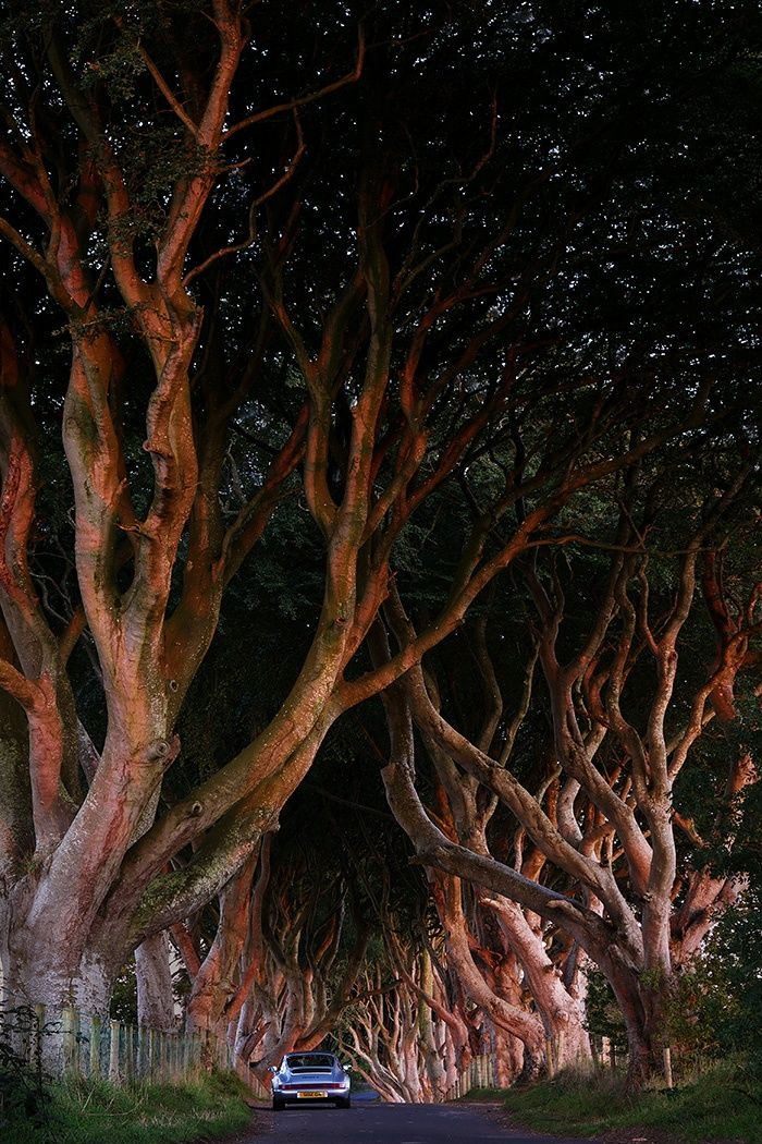 darkhedges by Adrian Lines on 500px