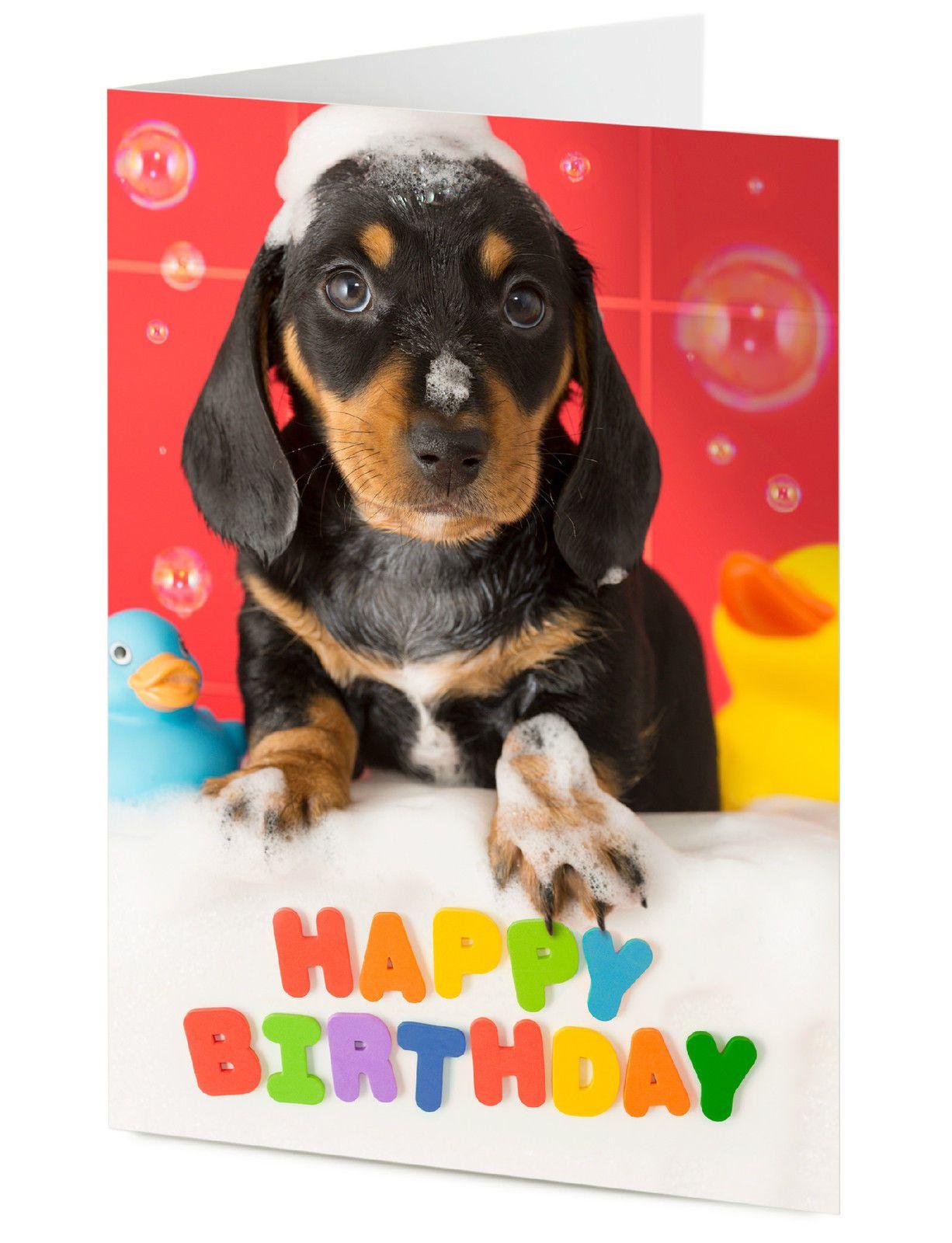 3 Gbp Happy Birthday Dachshund Puppy Dog Birthday Card Ebay Home