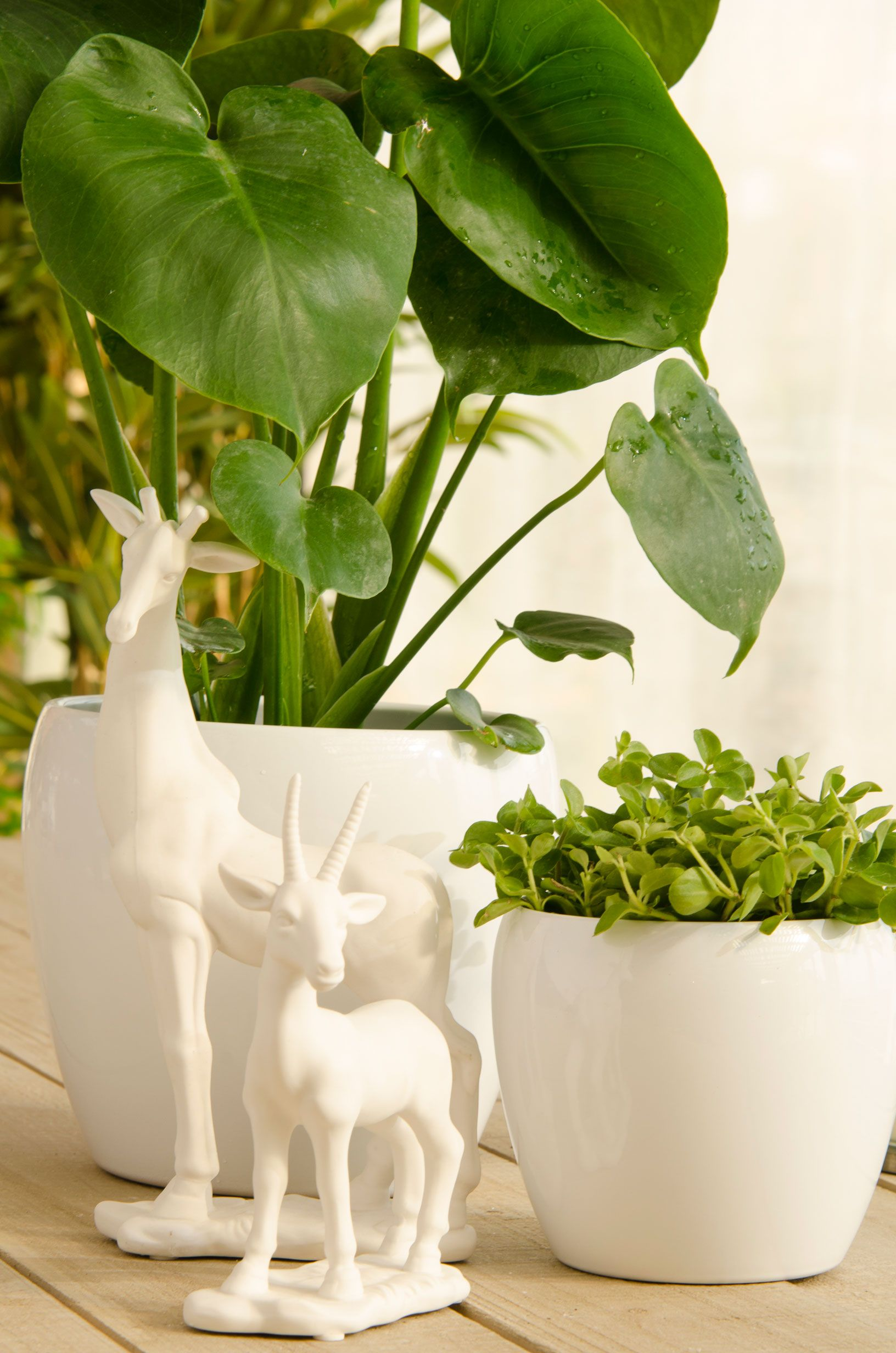 Pin de verdecora en macetas pinterest macetas jardiner a y accesorios - Verdecora macetas ...