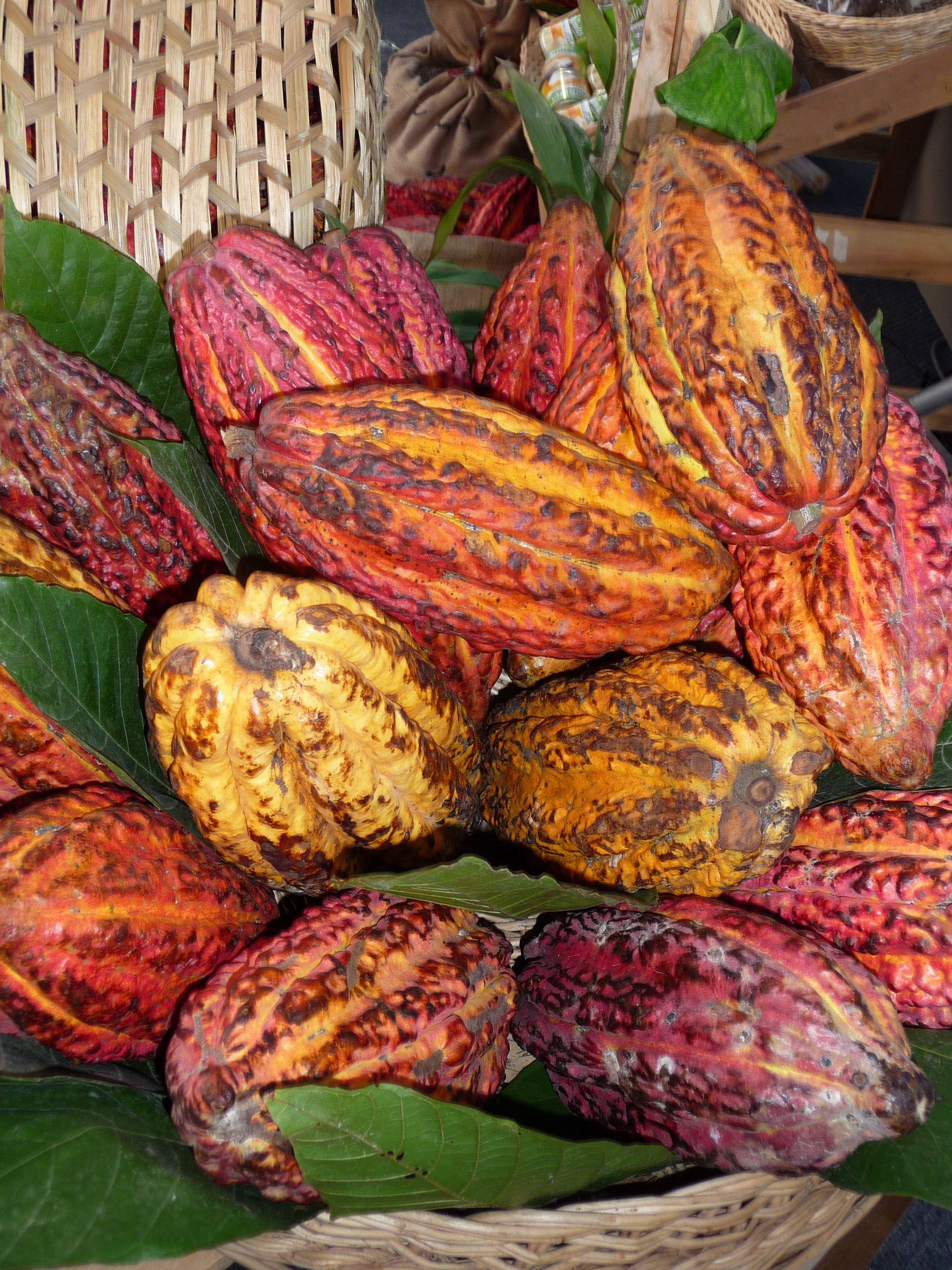 cacao Peru