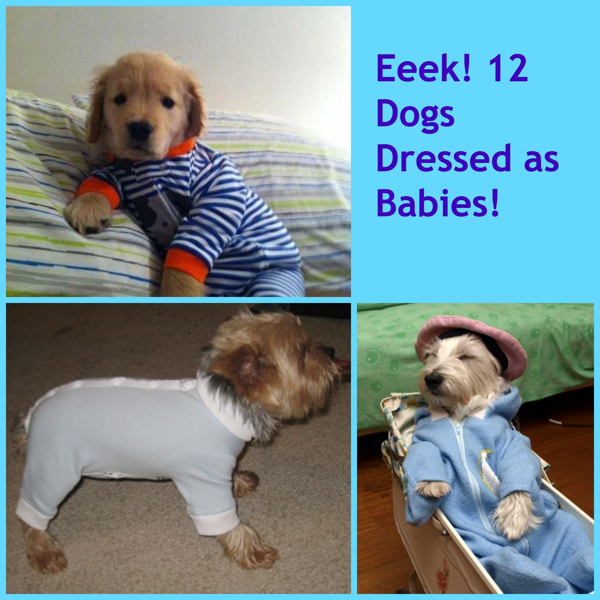 Too Cute! 12 Photos of Dogs Dressed As Babies Dog