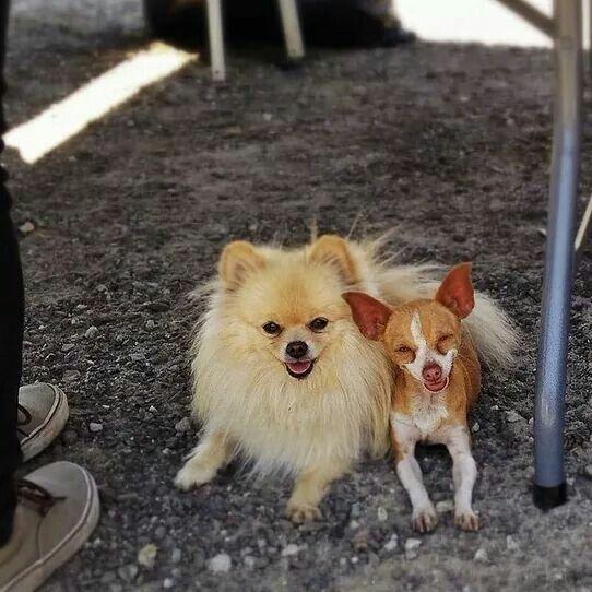Benson and Taco Millan