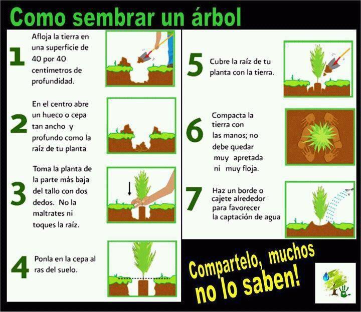 Como sembrar un arbol plantas pinterest como sembrar for Como sembrar plantas ornamentales