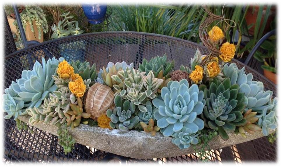 Large Succulent Arrangement With Echeveria And Dried Flowers Succulent Arrangements Succulents Echeveria