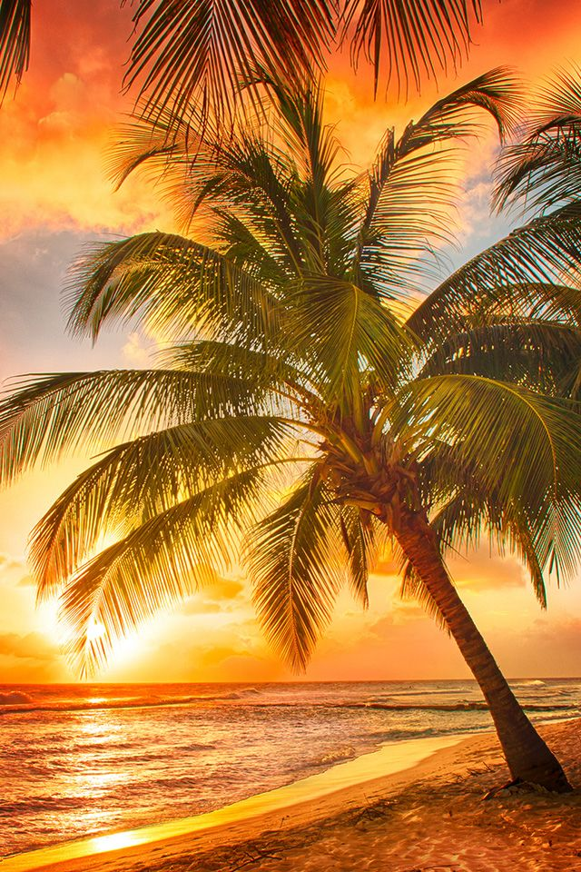 beach sunset with palm trees. a puerto rican sunset beach with palm trees t