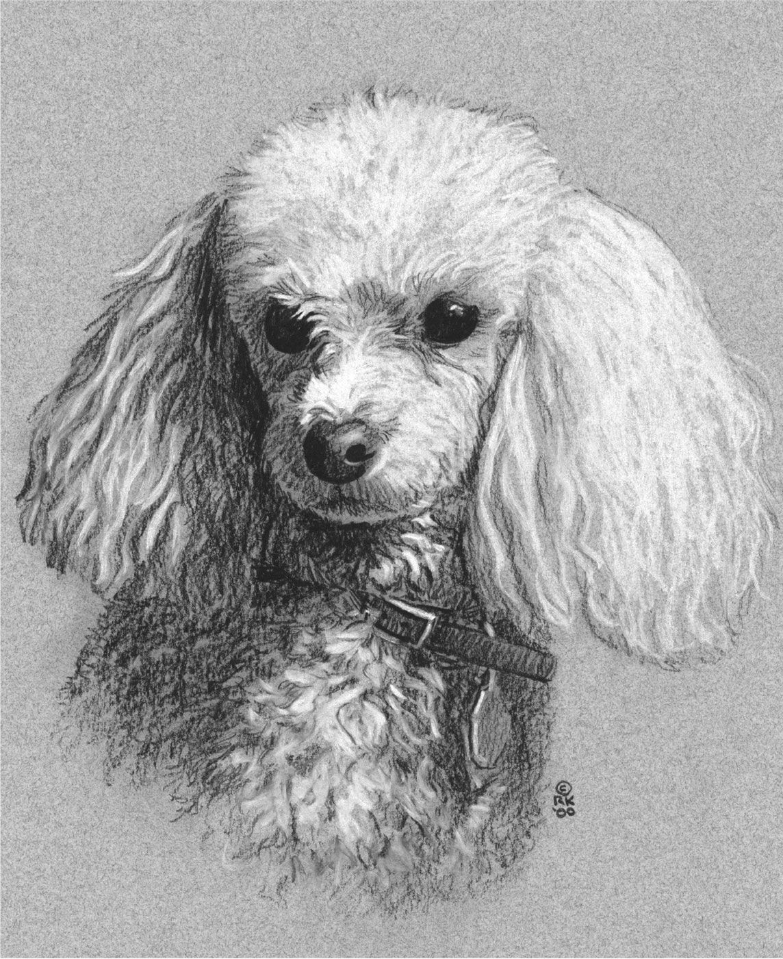 Holly 8x10 Poodle Drawing Pencil Drawings Of Animals Dog Drawing