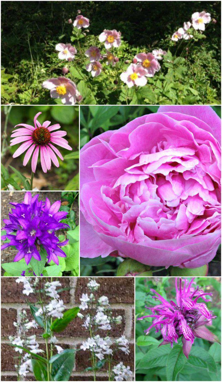Cut Flower Garden Perennials To Enjoy Indoors And Out Hometalk