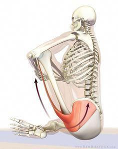 the daily bandha how to release the hip internal rotators