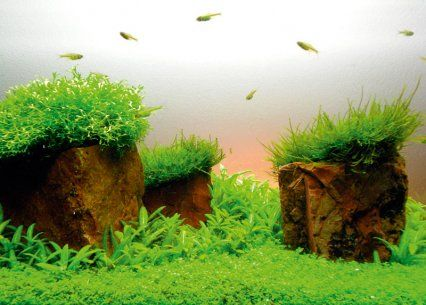 Marvelous How To Aquascape In Small Tanks From Practical Fishkeeping
