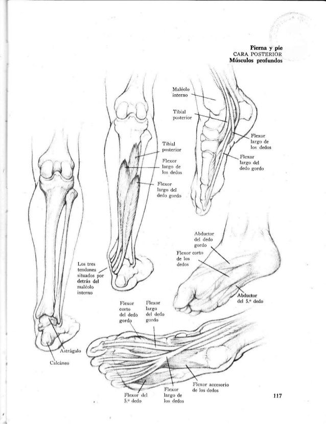 Anatomia-artistica-dibujo-anatomico-de-la-figura-humana | cuerpo ...