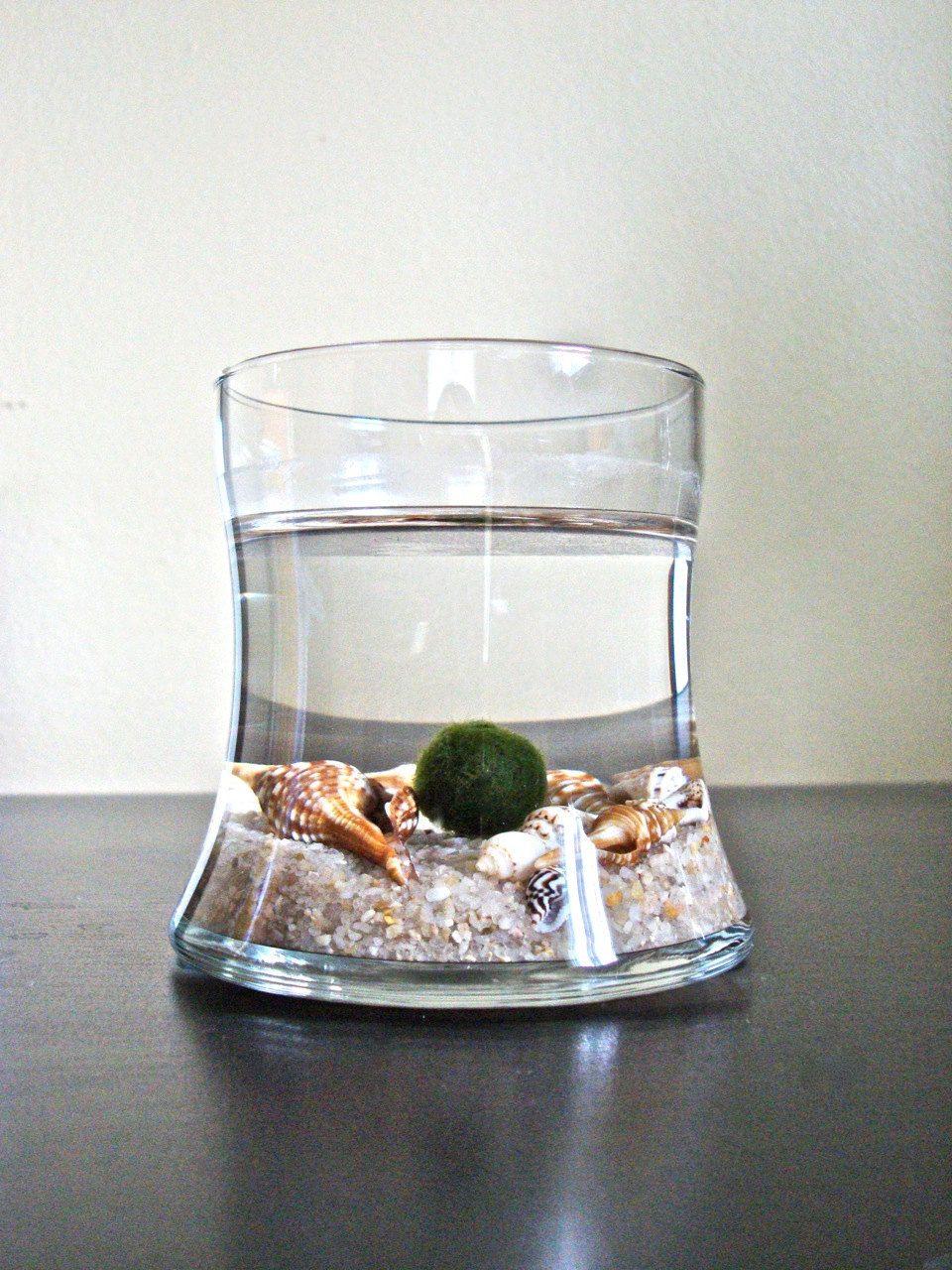 Japanese Marimo Pet Moss Ball Aquarium / Cute Aquarium