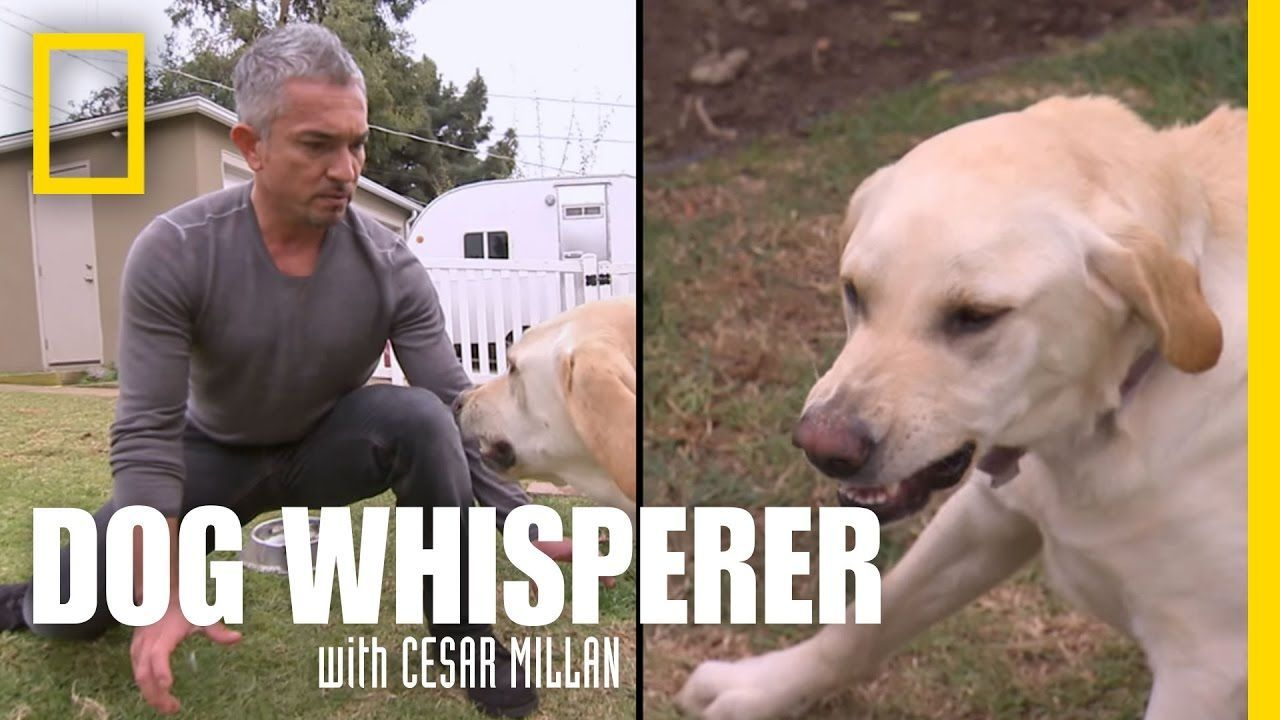 Showdown with Holly Dog Whisperer doginformation Dog