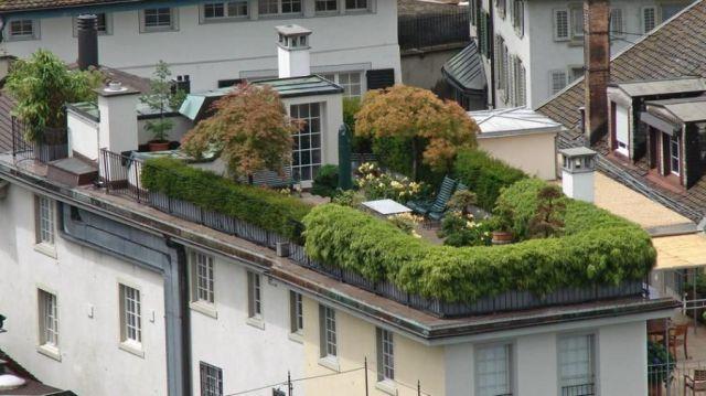Zielony dach :)