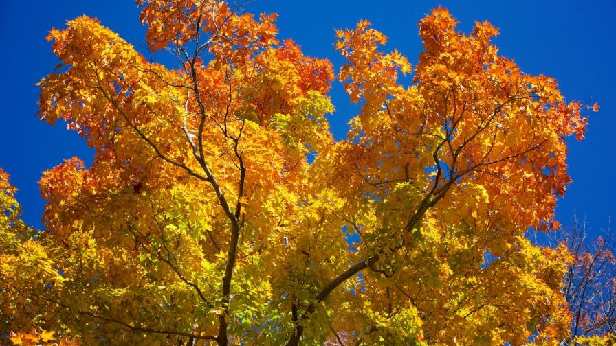 Autumn New England Wallpaper Download Full Free High Resolution New England Fall Hd Wallpaper Wallpaper Downloads