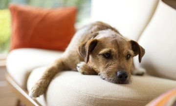 The Simplest Way To Remove Pet Hair From Furniture Pet Hair