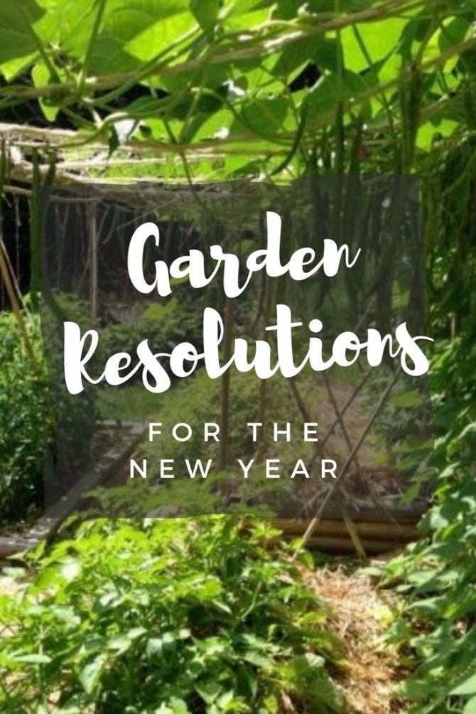 7 New Year Resolutions for Gardeners in 2019 Between the