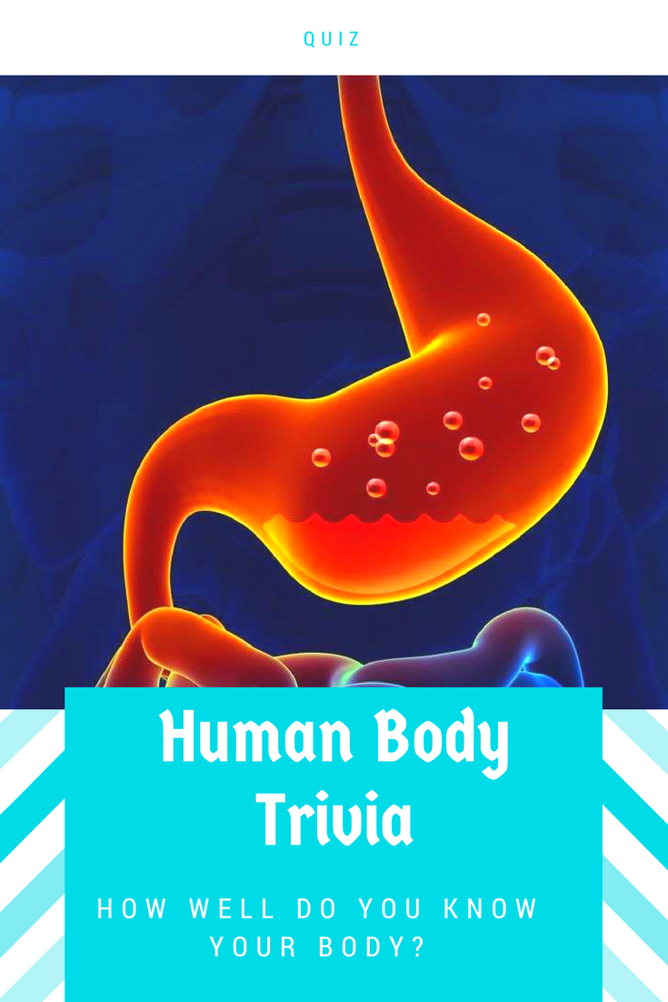 Can you stomach this organ function quiz general knowledge for many people knowing their body is one of the best ways to stay healthy ccuart Images