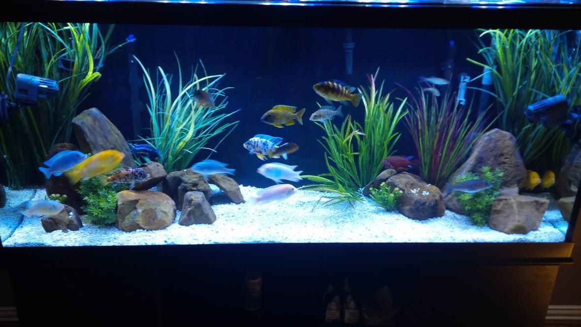 View 2 Full Verison Photos Of 120 Gallons Freshwater Fish Tank Photo 1 120 Gallon Mbuna Pe Fresh Water Fish Tank Tropical Fish Tanks Fish Tank Decorations