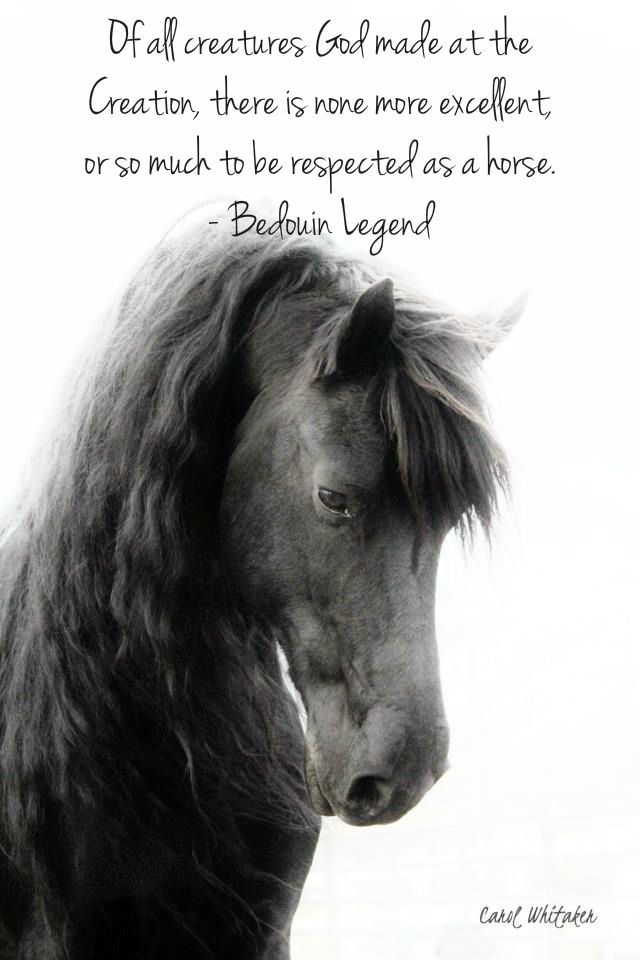 INSPIRATIONAL HORSE QUOTES The power of the horse's spirit
