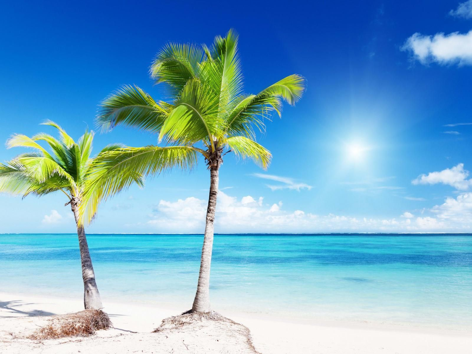 Android Beach Wallpapers Group 67: Android Beach Wallpapers Group 1600×1200 Palm Trees Beach