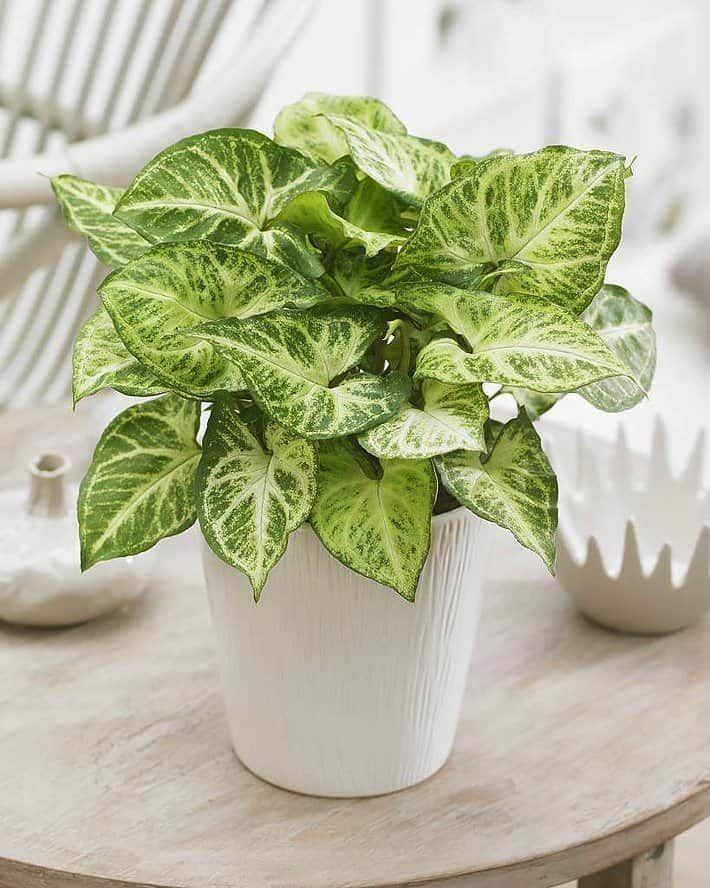 40 Best Indoor Plants That Don T Need Sunlight Plants 400 x 300