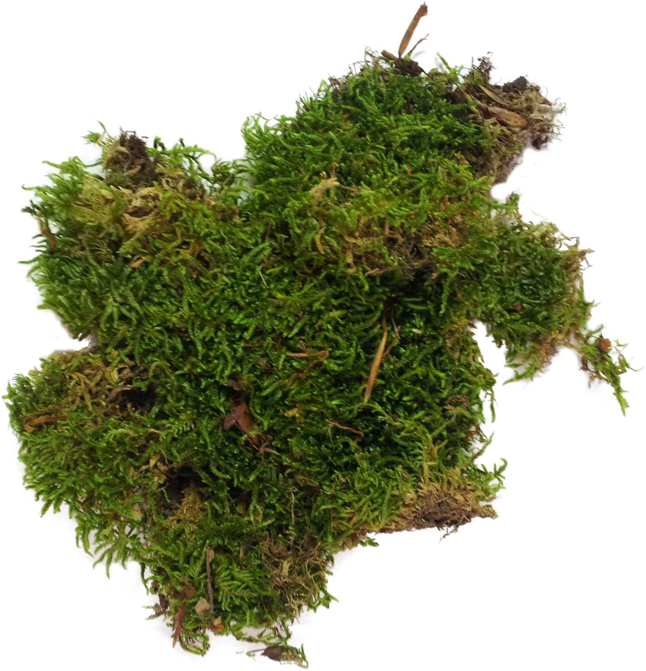 Great For Your Terrariums And Crafting 6 99 A Gallon Bag Of Moss