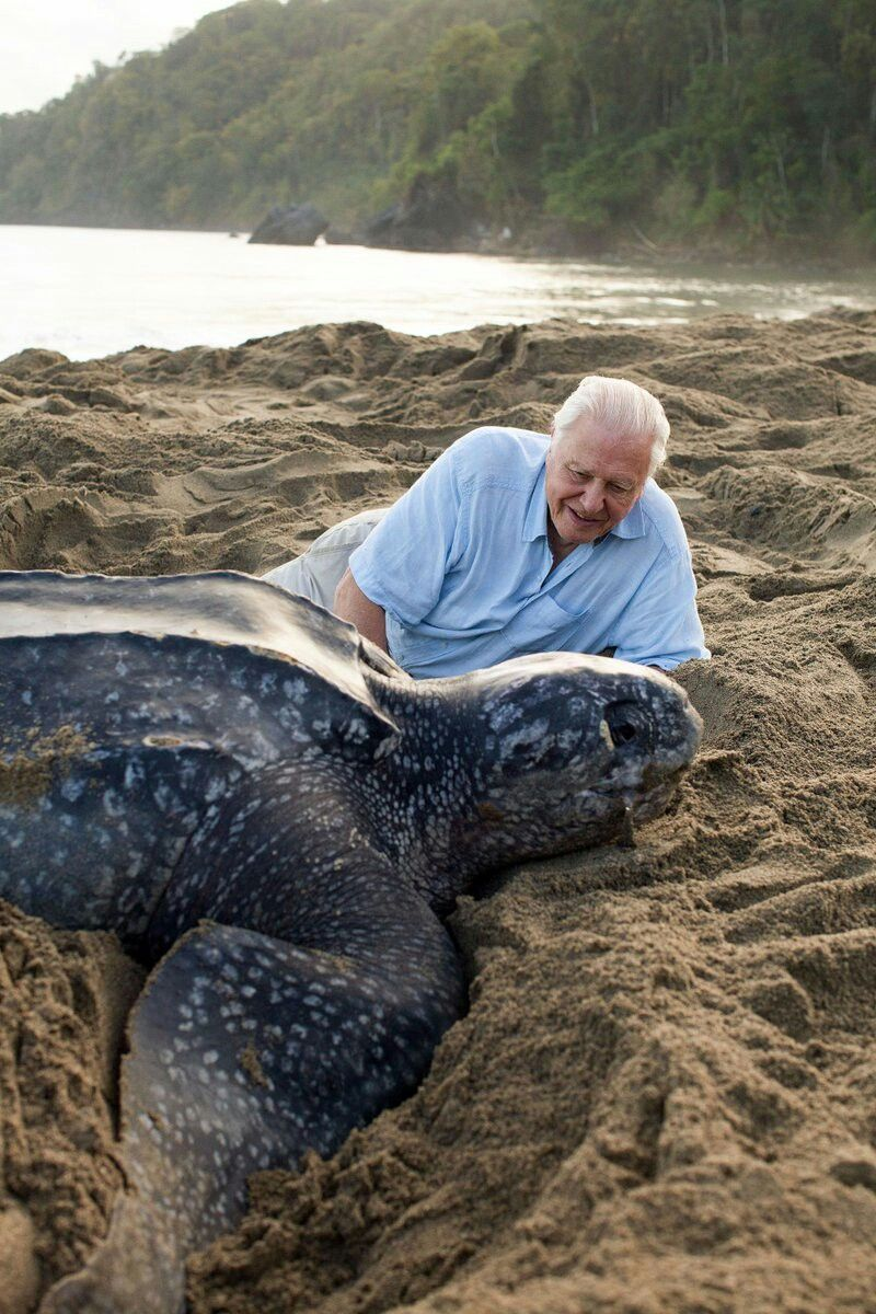 sir david attenborough with a leatherback sea turtle animals