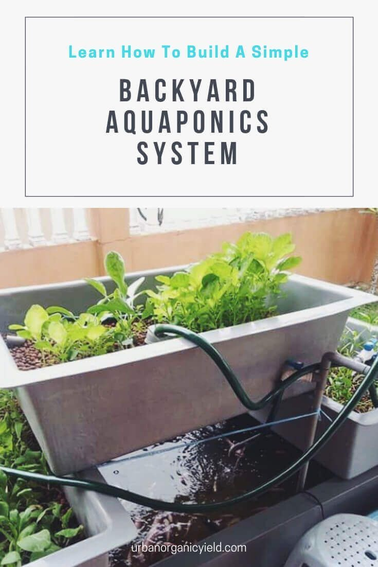 Learn How To Build A Cheap Diy Backyard Aquaponics System