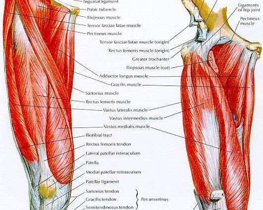 Posterior Knee Anatomy Ideas For The House Pinterest Human