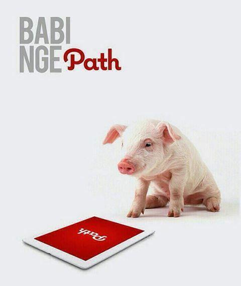 63 Gambar Babi Meme Paling Bagus