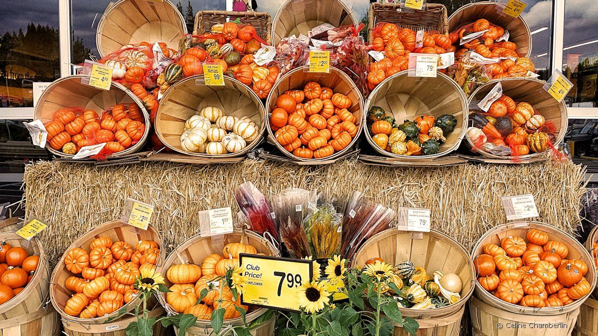 creative ways to display pumpkins for sale - google search