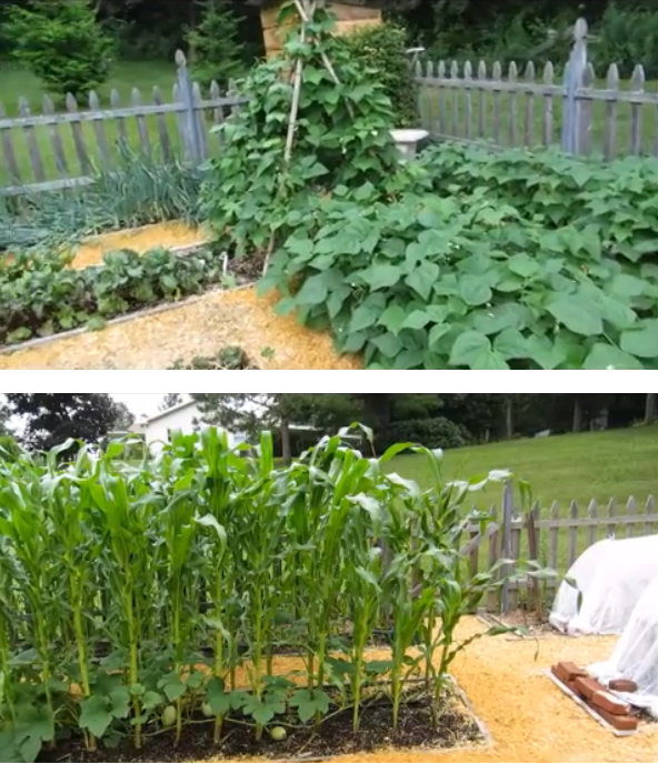 Tilling Backyard: Carol's No Till Garden Tour 2014